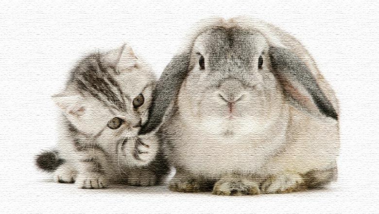 гороскоп на 2019 кролик
