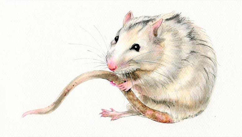 восточный гороскоп для крысы 2019