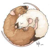 rats yin yang