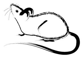 drawing rat