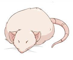 толстая крыска