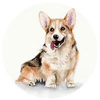 собака арт