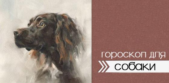 гороскоп для собаки 2020